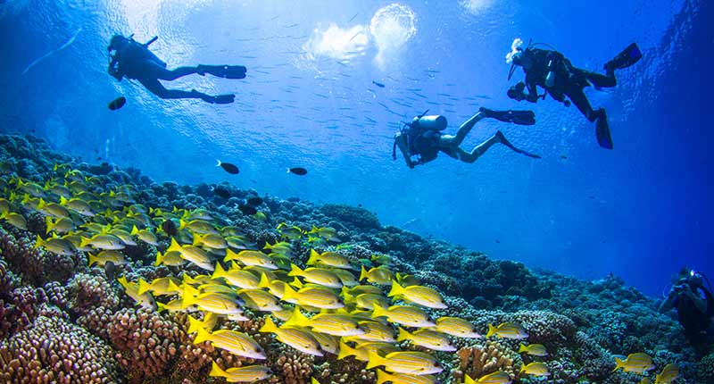 diving spots in bali