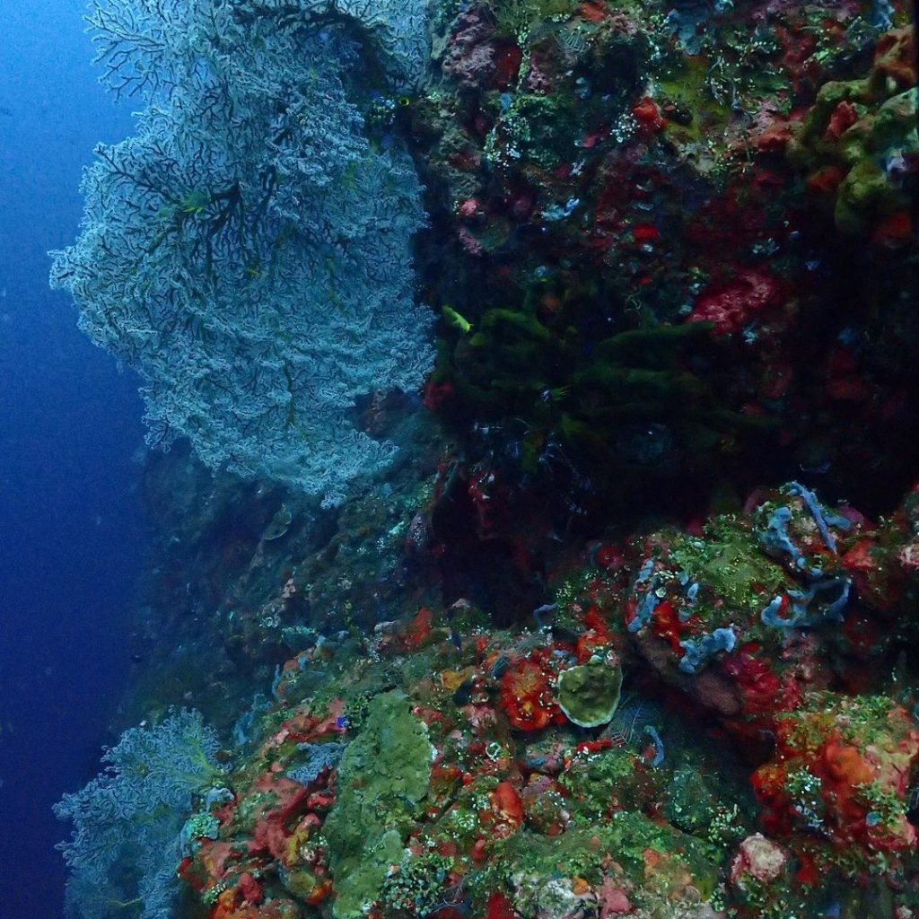 Wall Dive: Charmed by the Edge of Coral Reefs