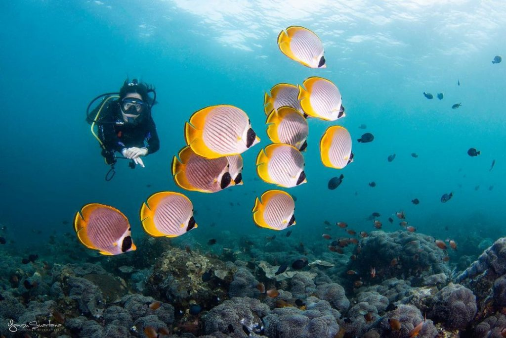 Five Types of Diving to Explore at Bali Dive Sites!