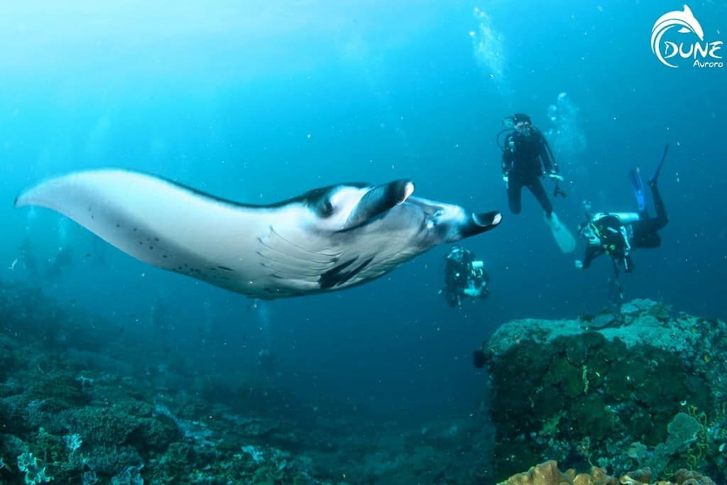 Choosing the Perfect Scuba Diving Vacations Destinations for Beginners